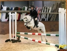 Childrens Competition Pony for sale/loan