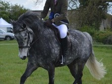 Fantastic Competition Pony