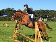 Beautiful 8 year old chestnut TB mare 16hh
