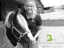 Equine Soft Tissue/ Massage Therapy