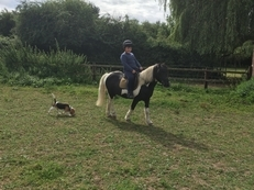 11.2hh Lead rein / First Ridden
