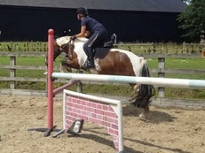 15hh Sweet Natured Mare for Loan