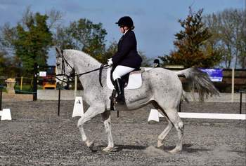 OPEN TO OFFERS 16hh Grey Mare