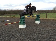 Stunning 14.2hh All Rounder