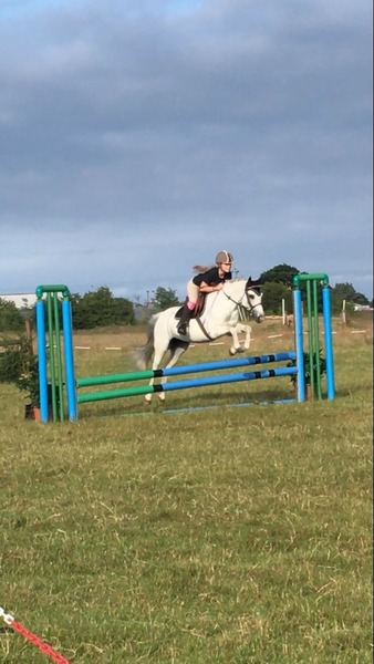 Looking for full 15.2hh horse