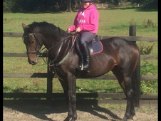 *Amazing bay mare for sale*