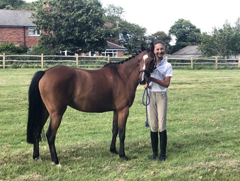 12.2hh Registered British Riding Pony - 6yrs old Mare