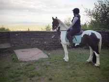 Stunning coloured mare ideal show pony/allrounder