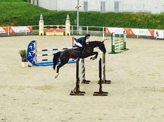5yo mare oldenburg by Cup de Or for sale