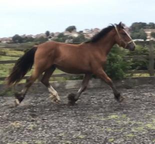 Horses & Ponies for Sale | Horsemart