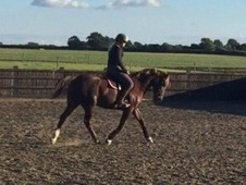11yrs, 14. 2hh Chestnut Mare, Teenagers dream