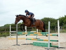 Fantastic quality 15. 2 7yrs bay mare