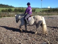 Highland Mare For Sale