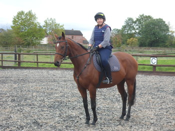 Lovely 15 . 2 hh Bright Bay Mare