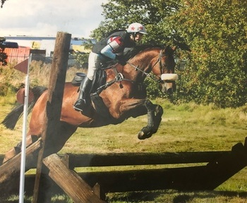 All rounder Riding Club 16hh gelding