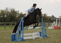 16hh Beautiful All Rounder *Price Reduced*