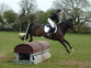 16hh Beautiful All Rounder *Price Reduced* for sale in United Kingdom