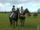 All Rounder Horse for sale in United Kingdom