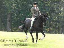 Dressage Horse for Loan