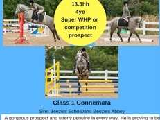 Outstanding WHP/Competition prospect.