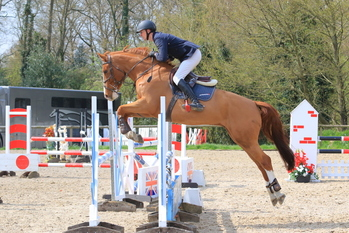 TOP SHOWJUMPER FOR SALE