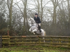 Lovely all round gelding