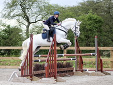 Proven Showjumper/Beautiful Allrounder