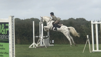 15.1hh Appaloosa rising 5yr old Mare