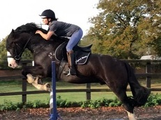 Handsome cob all rounder, for loan, Cobham