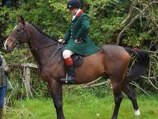 16. 3hh Super All-Rounder