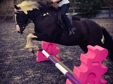 Excellent jumping Pony/Fun all-rounder