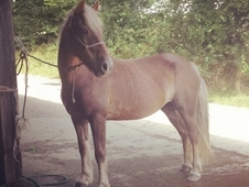 13. 2hh Project Pony
