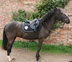 Quiet 14hh Dark Bay 9 yrs old Mare for sale in United Kingdom