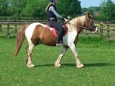 13. 2hh 9yr old second pony