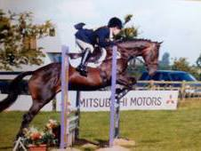 16HH Super Jumping Mare