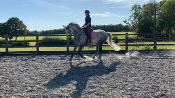 Part loan for gorgeous grey mare