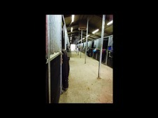Stables available from January