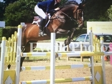 Striking showjumper / broodmare