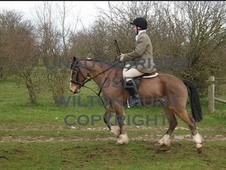 14. 1hh Hunting Pony
