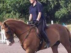 Wanted horse for LWVTB 15hh plus