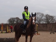 Stunning 14. 2hh Welsh D Mare