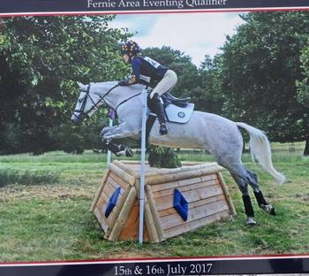 Perfect PC allrounder/competition pony
