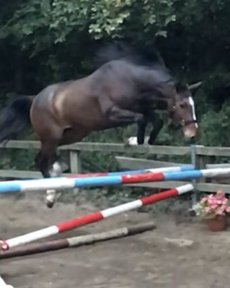 Quality Top Young Show-jumper/Eventer 3yr old