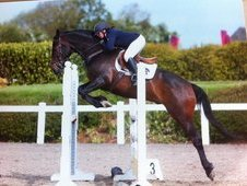 16. 1hh Stunning Riding Club 13yr Old