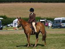 Quality British Riding Pony