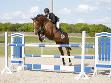 Talented Showjumping Mare Competing Newcomers/ Foxhunter