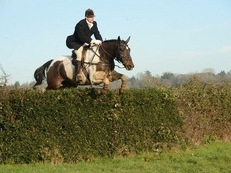 Brilliant hunter /eventer/ showjumper