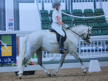 PROVEN BD YOUTH DRESSAGE PONY - Fab Lead rein/First ridden Potential worker both cradle & M&M