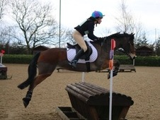13. 3hh, 11yo, Pony Club Pony
