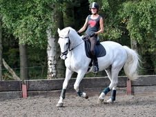 Sharer for dressage schoolmaster; fun all rounder and a great cha...